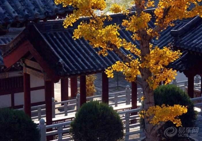 竹林寺图片