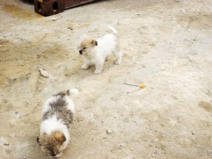 【阳光萌宠】双胞胎狗狗