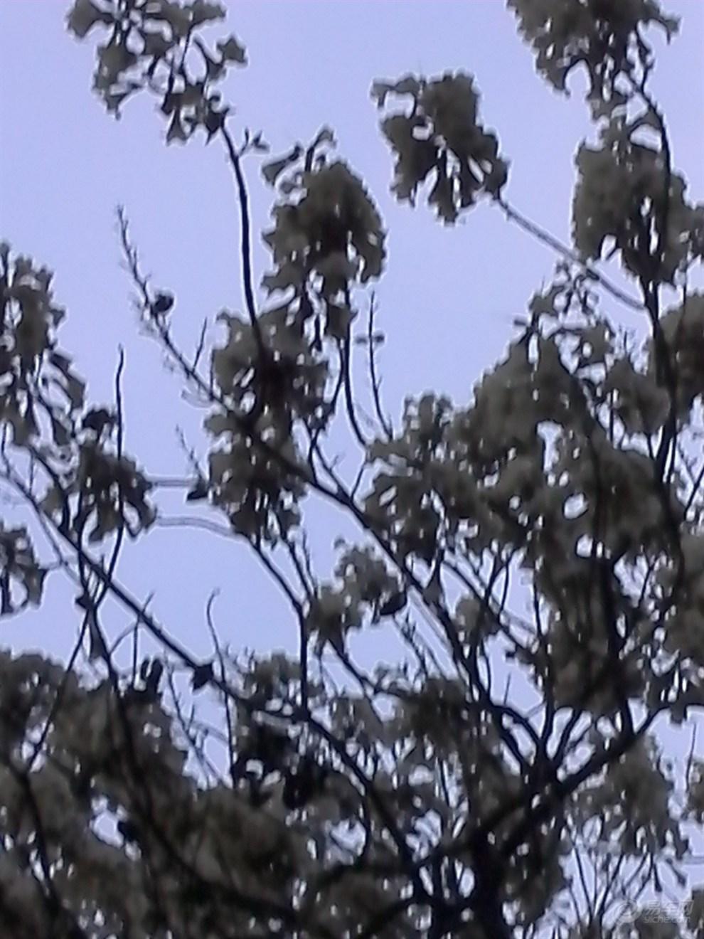 【泡桐花开了】_湖南论坛图片集锦