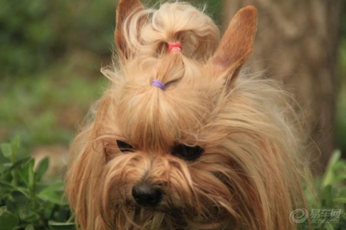 【【秀麻花】编发我的宠物】_宠物v麻花发型看看一边论坛辫图片
