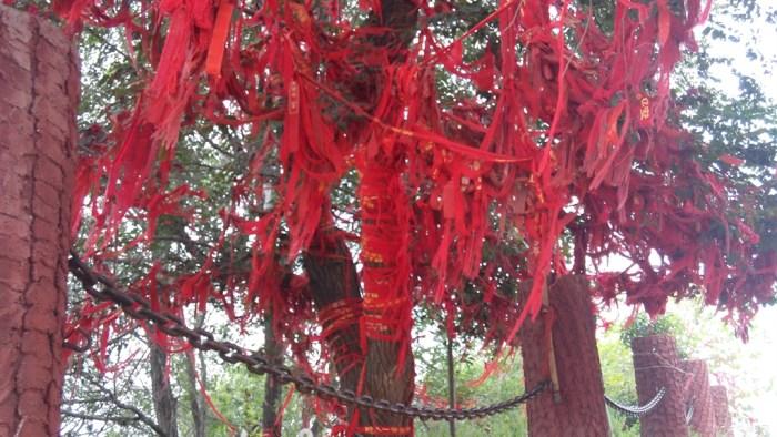寺庙门前的树上缠满了许愿,祝福的红丝带
