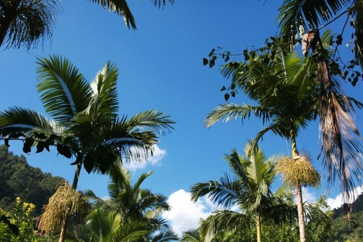瑞丽游-莫里热带雨林风景区
