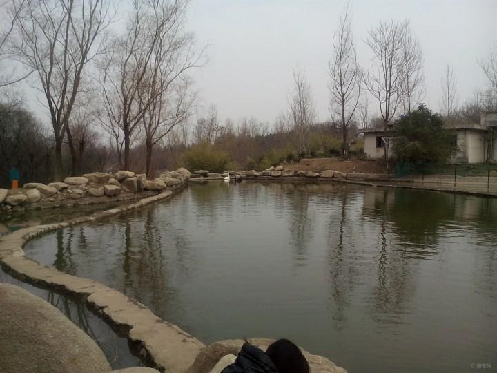 游秦岭动物园四(天鹅湖)