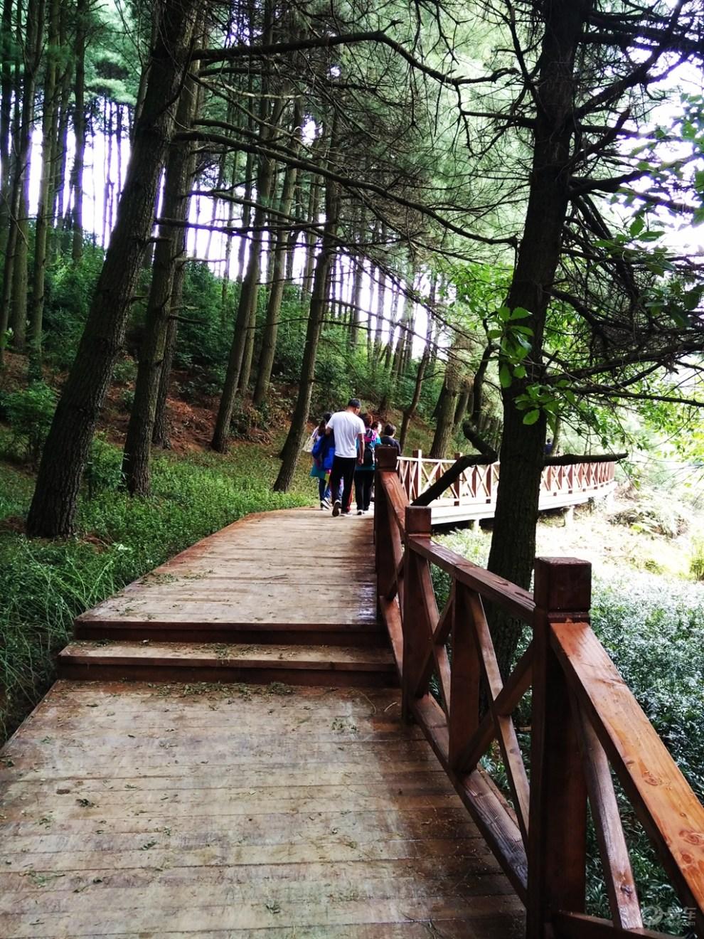 拱拢坪国家级森林公园一日游
