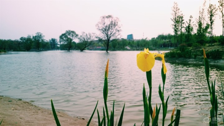 郑州雕塑公园里的湖光水色