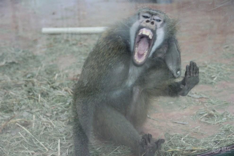 【支持北京论坛】天津动物园猩猩猴山篇