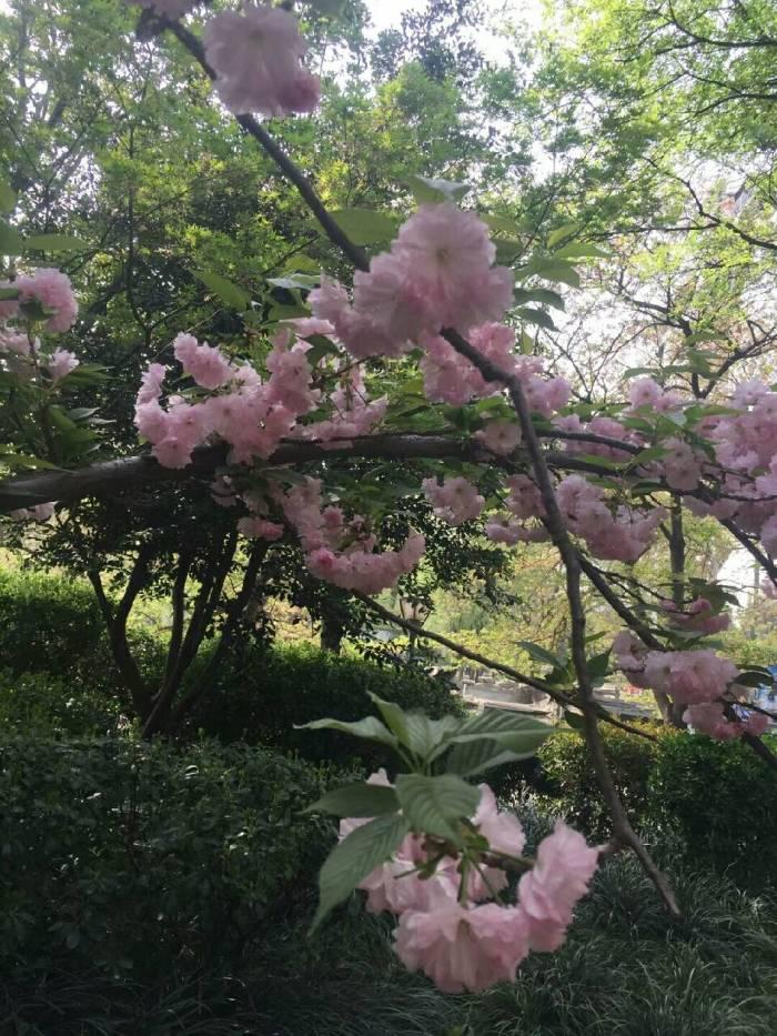 美好的春天