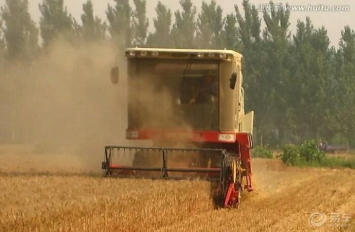 麦收的季节 小七陪伴