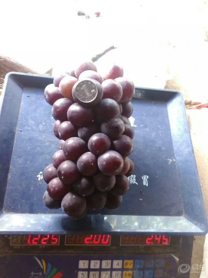 和爱车小七去摘葡萄喽