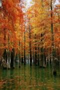 #乐驾新春#游最美仙境五桂山水杉林
