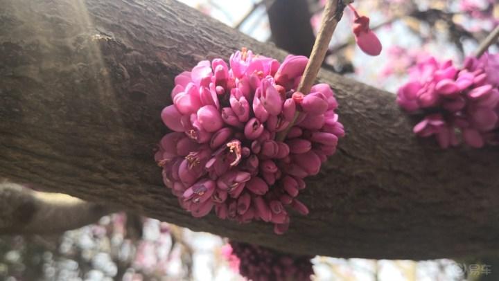 开着VV6去青龙寺赏樱花!