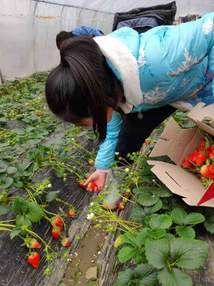 【上海新福会开春亲子活动】韩式烤肉&草莓采摘欢乐自驾