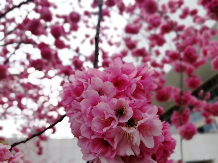 相约樱花盛开的季节,找寻最真的大自然——春天的魅力!