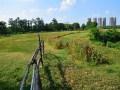绿意盎然的夏天丨走进美丽的贡湖湾湿地公园