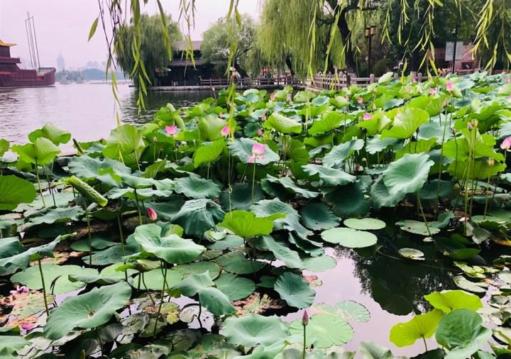 白天看湖,晚上观灯:一天两刷济南大明湖
