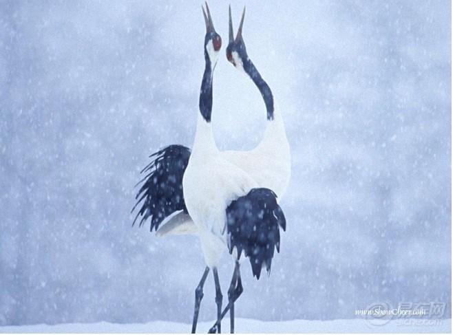 肉眼看假,慧眼观空,法眼见宗,有如鹤立雪中,愚者看鹤,聪者观雪,智者见