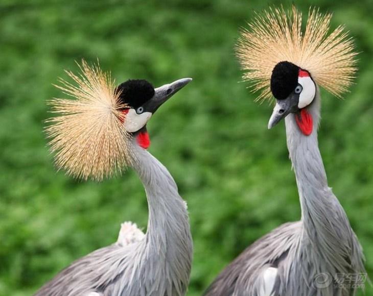 位于山东荣成市龙须岛镇,占地2000亩,是一所放养式野生动物园.