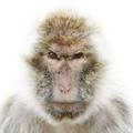 花果山没有猴子