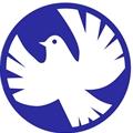 白色和平鸽
