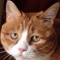 蜡笔加菲老猫