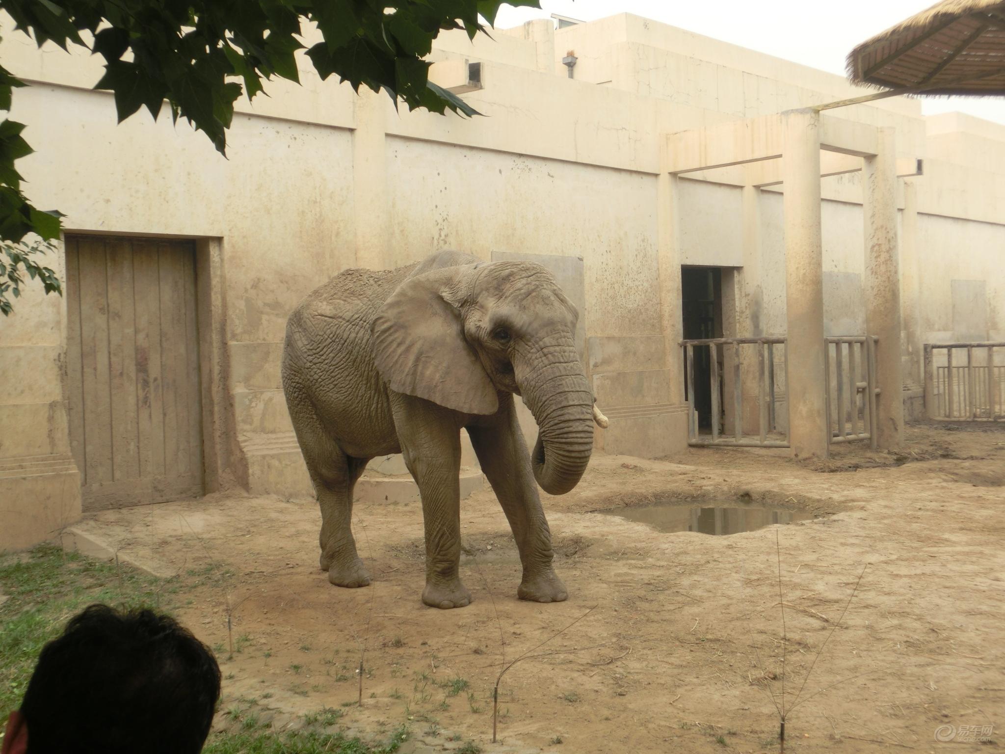 北京动物园 相片详情                            cimg1087